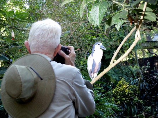 Boat-billed Heron over Dan's Shoulder by Lee at LPZ
