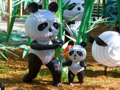 Pandas - ZooMinations at Lowry Park Zoo