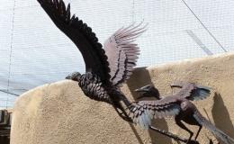 ARE BIRDS 'COUSINS' TO REPTILES?NO.