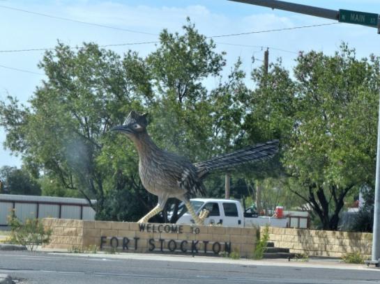 Roadrunner in Ft Stockton TX (25)_01