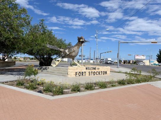 Roadrunner in Ft Stockton TX (27)
