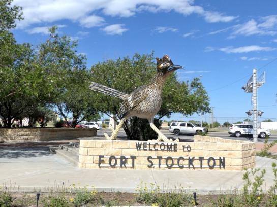 Roadrunner in Ft Stockton TX