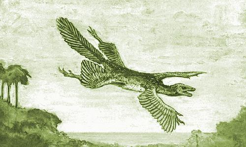 William Beebe's hypothetical -Tetrapteryx- with four wings 1915