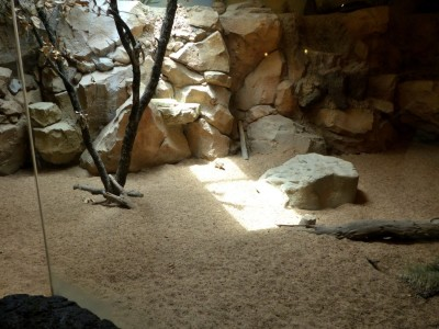 Antelope Ground Squirrel Houston Zoo 5-6-15 by Lee (1)