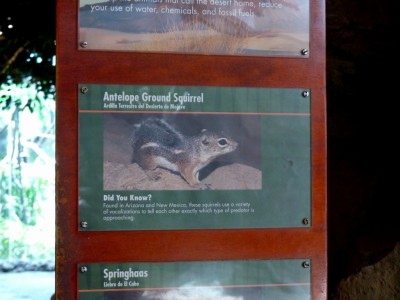 Antelope Ground Squirrel Sign Houston Zoo 5-6-15 by Lee