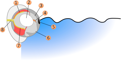 Four-eyed Fish diagram ©WikiC