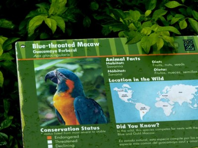 Blue-throated Macaw (Ara glaucogularis) Sign Houston Zoo by Lee