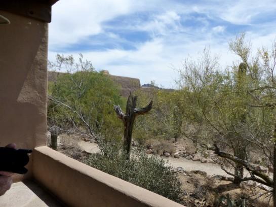Cactus Boot Desert Mus-Tuscon (2)