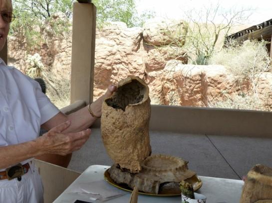 Cactus Boot Desert Mus-Tuscon (3)