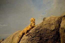 Arizona-Senora Desert Museum –Critters