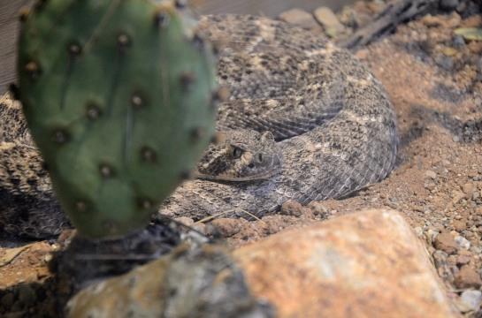Dan's Ariz-Sonora Desert Museum (61)