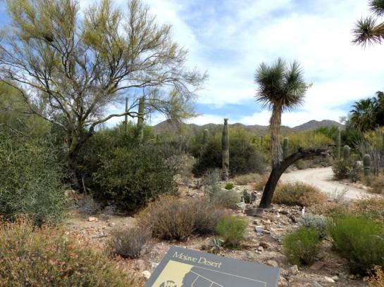 Desert Mus-Tucson (144)