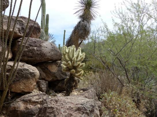 Desert Mus-Tucson (157)