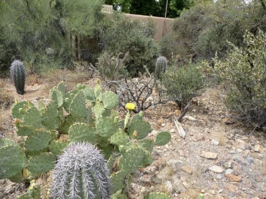 Desert Mus-Tucson (168)