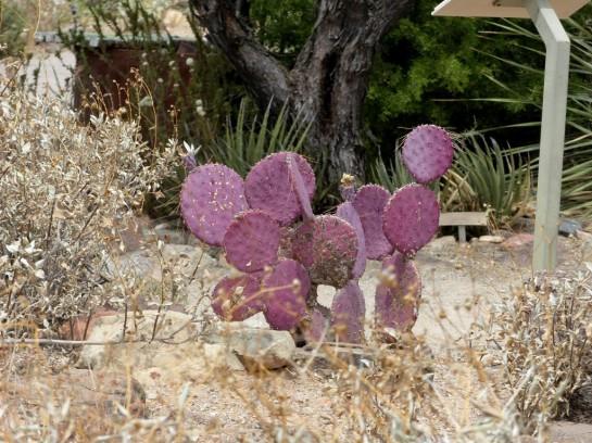 Desert Mus-Tucson (172)