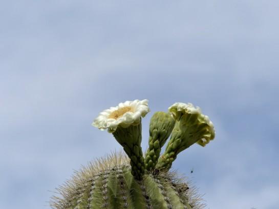 Desert Mus-Tucson (174)