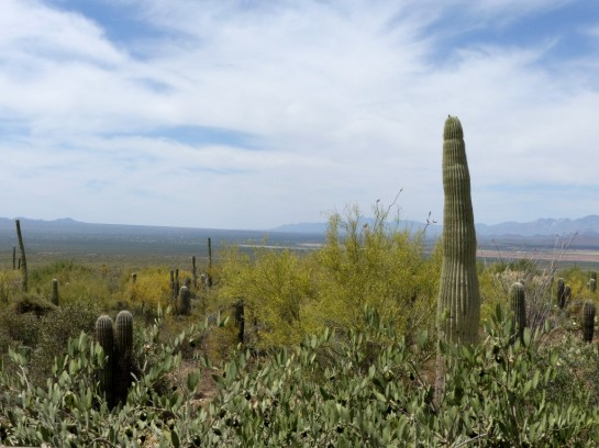 Desert Mus-Tucson (177)