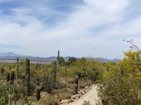 Desert Mus-Tucson (178)