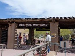 Arizona-Senora Desert Museum –Vacation