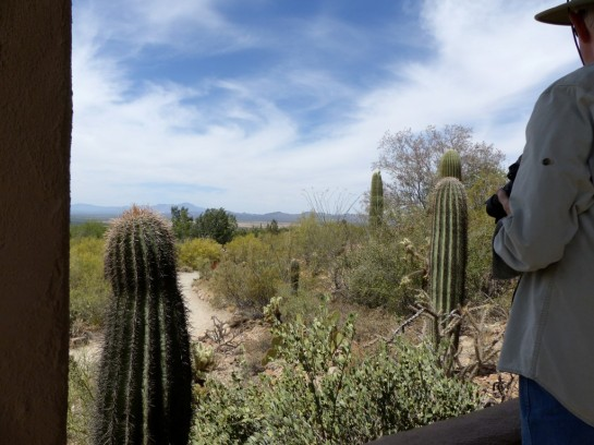 Desert Mus-Tucson (195)