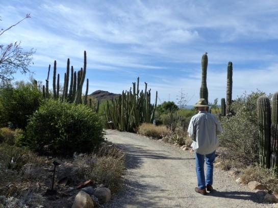 Desert Mus-Tucson (21)