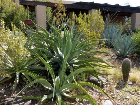 Desert Mus-Tucson (27)