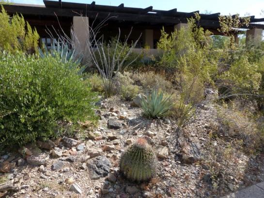 Desert Mus-Tucson (29)