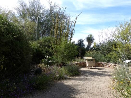 Desert Mus-Tucson (40)