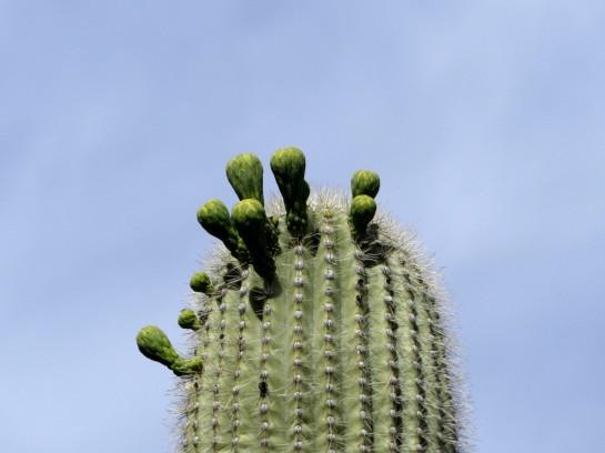 Desert Mus-Tucson (42)