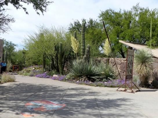 Desert Mus-Tucson (49)