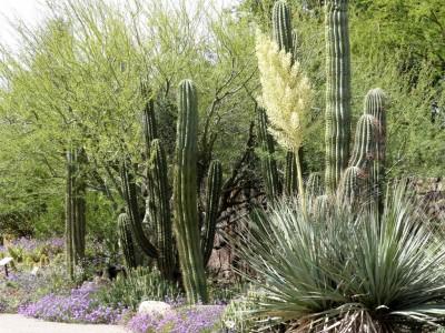 Desert Museum in Tucson, Arizona