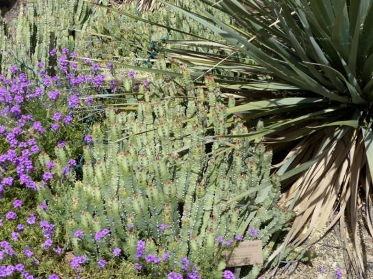 Desert Mus-Tucson (54)
