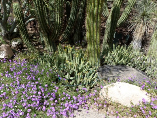 Desert Mus-Tucson (59)