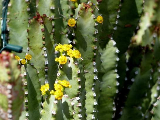 Desert Mus-Tucson (61)