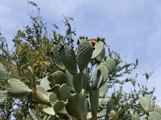 Desert Mus-Tucson (64)