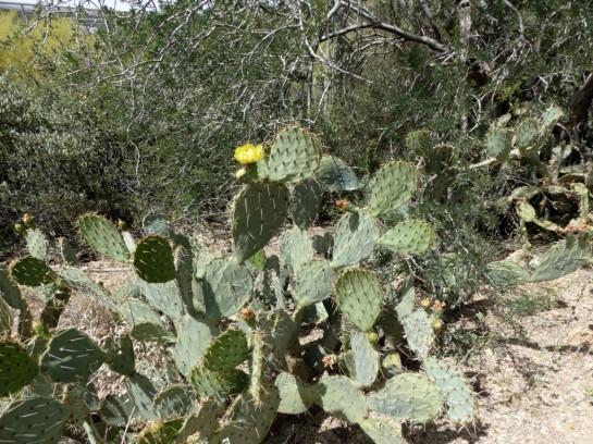 Desert Mus-Tucson (72)