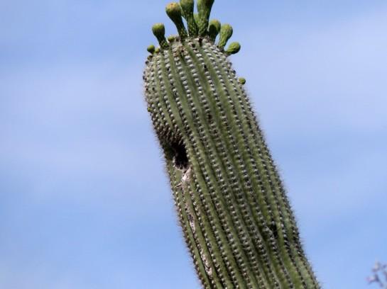 Desert Mus-Tucson (76)