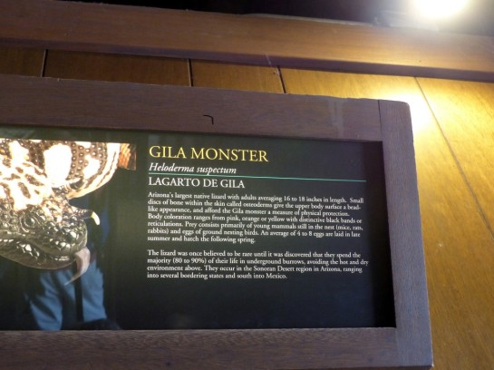 Gila Monster Desert Mus-Tucson (186)