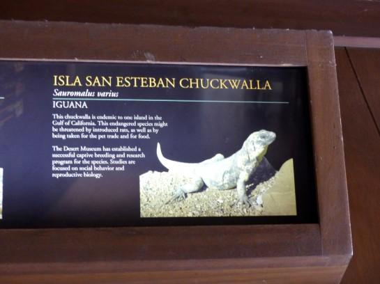 Isla San Esteban Chuckwalla Sign Desert Mus-Tucson (187)
