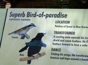 Superb Bird-of-paradise Sign San Diego Zoo by Lee