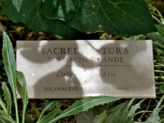 Sacred Atura _005 Desert Mus-Tuscon