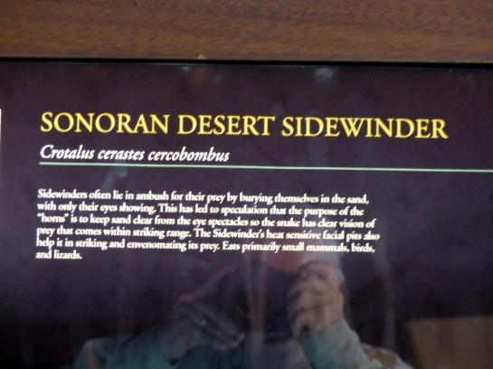 Sonoran Desert Sidewinder Desert Mus-Tuscon