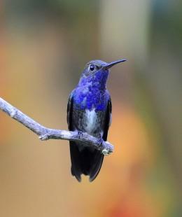 Heaven's New Jerusalem and Birds –Sapphire