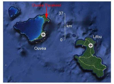 Map of where Ouvéa Parakeet Found, by Ian
