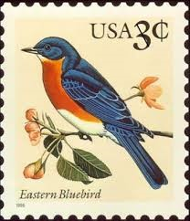 Eastern Bluebird postage PD