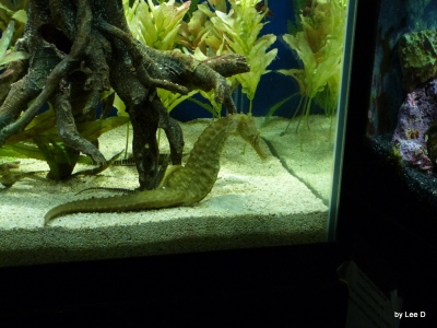 Seahorse at Lowry Park Zoo by Lee