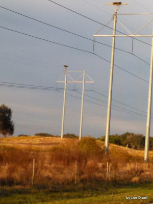Bald Eagle on Old Bartow Rd