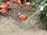 Flamingo Wanabee