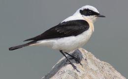 World Bird Names Changes Version10.1