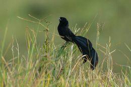 Birdwatching, Bugs, andWoodstock